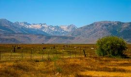 山大农场视图在西部美国 免版税库存图片