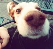 山姆狗 库存图片