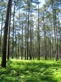 山姆・休士顿国家森林 免版税库存图片