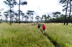 登山家走在深森林的图象小组 图库摄影