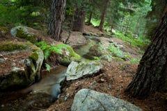 山小河到森林里 库存照片