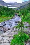 山小河和狂放的高山花在一串高高山足迹在冰川国家公园 免版税图库摄影