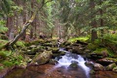 山小河在一个国家公园森林里 库存图片
