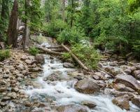 山小河在一个夏日在少许森林里 免版税库存图片