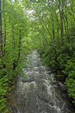 山小河在春天 图库摄影
