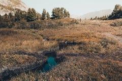 山小河在森林里 免版税库存照片