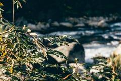 山小河在森林里 库存照片