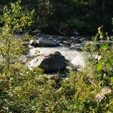 山小河在森林里 库存图片