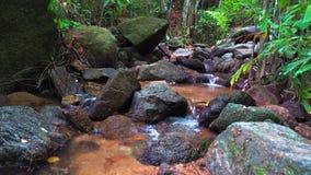 山小河在森林里 影视素材
