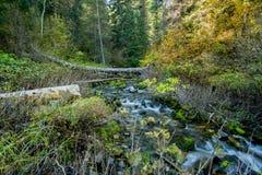 山小河在秋天流经犹他山 免版税库存照片