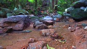 山小河在美丽的森林新鲜的纯净的山水中 美好的横向 股票视频