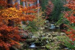 山小河在美丽的森林里 库存图片