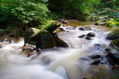 山小河在绿色森林里 库存图片