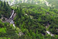 山小河在Tatra国家公园 免版税库存照片