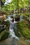 山小河的水小瀑布的风景 河流经一个美丽的森林围拢的生苔岩石 免版税库存照片