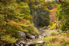 山小河看法与秋天颜色的 免版税图库摄影