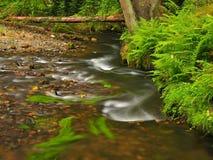山小河以新绿色在雨天以后离开森林。第一种秋天颜色在晚上晒黑光芒。夏天的结尾在河的 免版税库存图片
