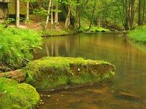 山小河以新绿色在雨天以后离开森林。第一种秋天颜色在晚上晒黑光芒。夏天的结尾在河的 免版税库存照片