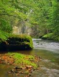 山小河以新绿色在雨天以后离开森林。第一种秋天颜色在晚上晒黑光芒。夏天的结尾在mountai的 免版税库存图片