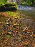 山小河以新绿色在雨天以后离开森林。第一种秋天颜色在晚上晒黑光芒。夏天的结尾在mountai的 库存图片