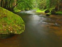 山小河以新绿色在雨天以后离开森林。第一种秋天颜色在晚上晒黑光芒。夏天的结尾在mountai的 免版税库存照片