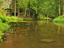 山小河以新绿色在雨天以后离开森林。  免版税库存图片