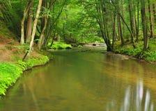 山小河以新绿色在雨天以后离开森林。  库存照片