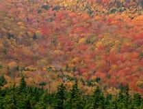 从黑山山顶,三明治范围原野,白色山国家森林,新罕布什尔 免版税库存图片