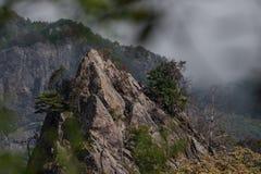 山岩石和树 免版税库存图片