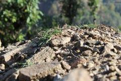 山岩石和树 库存图片