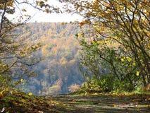 山峭壁俯视的秋天叶子边缘  库存照片