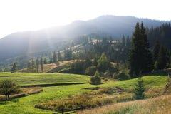 山峰、具球果森林和绿色草甸 图库摄影