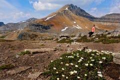 山峰和野花风景看法在高山草甸 免版税库存照片