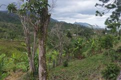 山峰哈尤亚森林和谷  图库摄影