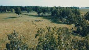 山峰空中寄生虫视图与森林在上面,Russi的 股票录像