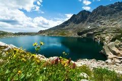 山开花风景科罗拉多 免版税图库摄影