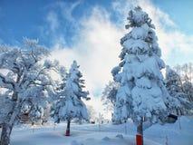 山形县结冰的树雪妖怪和滑雪倾斜在mt 皂市 免版税库存照片