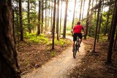 山循环在夏天森林里的骑自行车的人骑马 库存照片