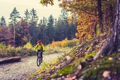 山循环在秋天森林里的骑自行车的人骑马 库存图片
