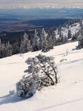 山擦亮雪结构树冬天 免版税库存图片