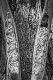山斑马下颌 免版税库存图片