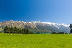 山新西兰 图库摄影