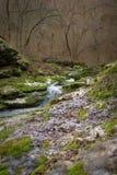 山春天在森林里 库存图片