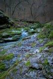 山春天在森林里 图库摄影