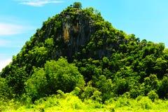 山是它是美丽的被包围的太绿色森林 库存图片