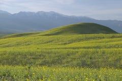 山景和壮观的沙漠金子 免版税库存图片