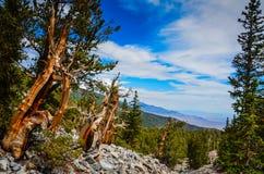山景色- Bristlecone杉木树丛足迹-伟大的水池Nati 库存照片