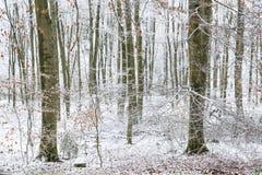 山有树的山毛榉森林在冬天季节期间 图库摄影