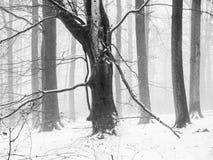 山有残破的树枝的山毛榉森林在冬天季节期间 图库摄影