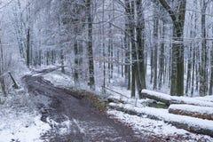 山有砍的树的山毛榉森林在冬天季节期间 免版税库存图片